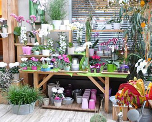 Blumen Gestenlauer Veitsbronn